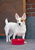 DOG 02 JS0009 01