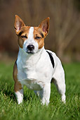 DOG 02 JS0012 01