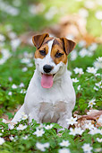 DOG 02 KH0046 01