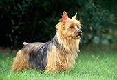 DOG 02 KH0050 01
