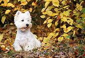 DOG 02 KH0053 01