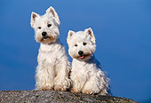 DOG 02 KH0055 01