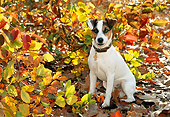 DOG 02 KH0056 01