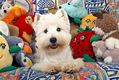 DOG 02 KH0057 01