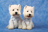 DOG 02 KH0058 01