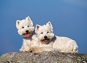 DOG 02 KH0059 01