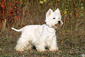 DOG 02 KH0060 01