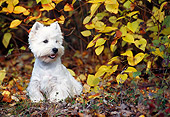 DOG 02 KH0062 01
