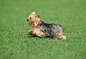 DOG 02 KH0065 01