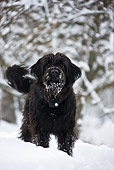 DOG 02 KH0067 01