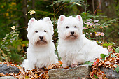 DOG 02 LS0002 01