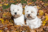 DOG 02 LS0003 01