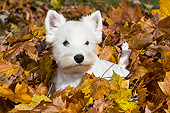 DOG 02 LS0004 01