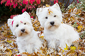 DOG 02 LS0005 01