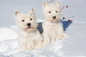 DOG 02 LS0008 01