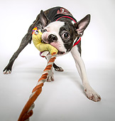DOG 02 MQ0045 01