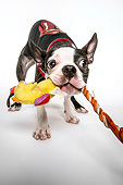 DOG 02 MQ0046 01