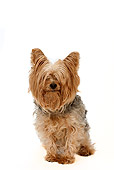 DOG 02 MR0020 01