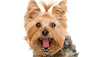 DOG 02 MR0022 01