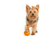 DOG 02 MR0023 01