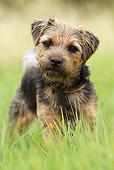 DOG 02 NR0033 01