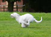 DOG 02 NR0034 01