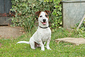DOG 02 NR0043 01