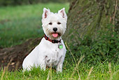 DOG 02 NR0044 01