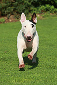 DOG 02 NR0047 01