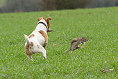 DOG 02 NR0052 01