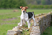 DOG 02 NR0054 01