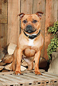 DOG 02 NR0063 01
