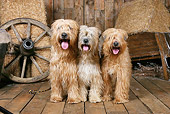 DOG 02 NR0065 01