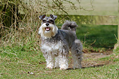 DOG 02 NR0071 01
