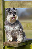 DOG 02 NR0072 01