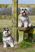 DOG 02 NR0073 01