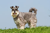 DOG 02 NR0075 01