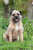 DOG 02 NR0083 01
