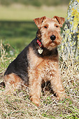 DOG 02 NR0090 01