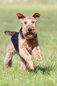 DOG 02 NR0092 01