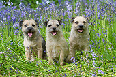 DOG 02 NR0097 01