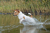 DOG 02 NR0098 01