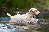 DOG 02 NR0101 01