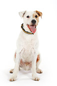 DOG 02 PE0003 01