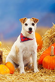 DOG 02 PE0004 01