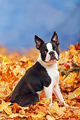 DOG 02 PE0005 01