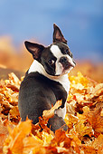 DOG 02 PE0007 01