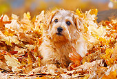 DOG 02 PE0008 01