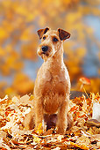DOG 02 PE0009 01