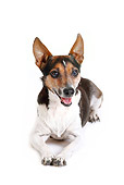 DOG 02 PE0010 01
